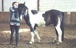 Das in Hilter gestohlene Pferd