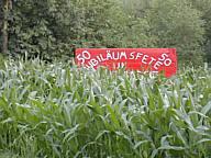 Zugewachsenes Schild der Renkenberger Landjugend