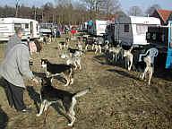 Schlittenhunde in Renkenberge