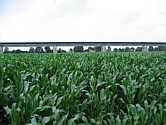 Mais auf dem Höpen