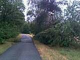 Sturmfolgen in Wippingen und Umgebung