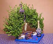 Wippinger Buchsbaum-Tunschere