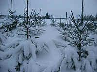 Winter in Wippingen