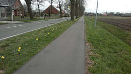 Osterglocken an der K114 in Wippingen