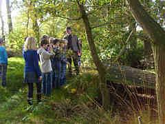 Exkursion in den Wippinger Wald