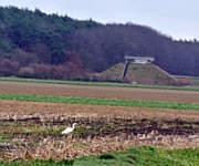 Weißer Reiher in Wippingen