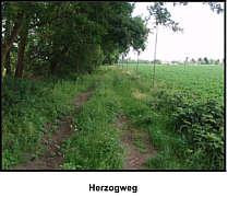 Herzogweg Wippingen