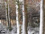 Schnee in Wippingen