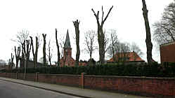 Enthauptete Bäume am Friedhof