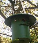 In diesen Vogelkasten sind Hummeln eingezogen
