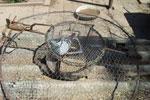 Habichtfangkorb mit lebender Ködertaube, Foto: KGDV