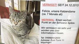 Katzen-Vermisstenmeldung