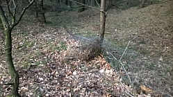Kaputter Wildschutzzaun