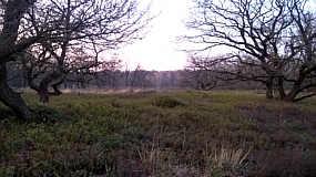 Naturschutzgebiet Am Busch