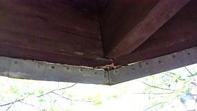 Pilz an der Dachkonstruktion