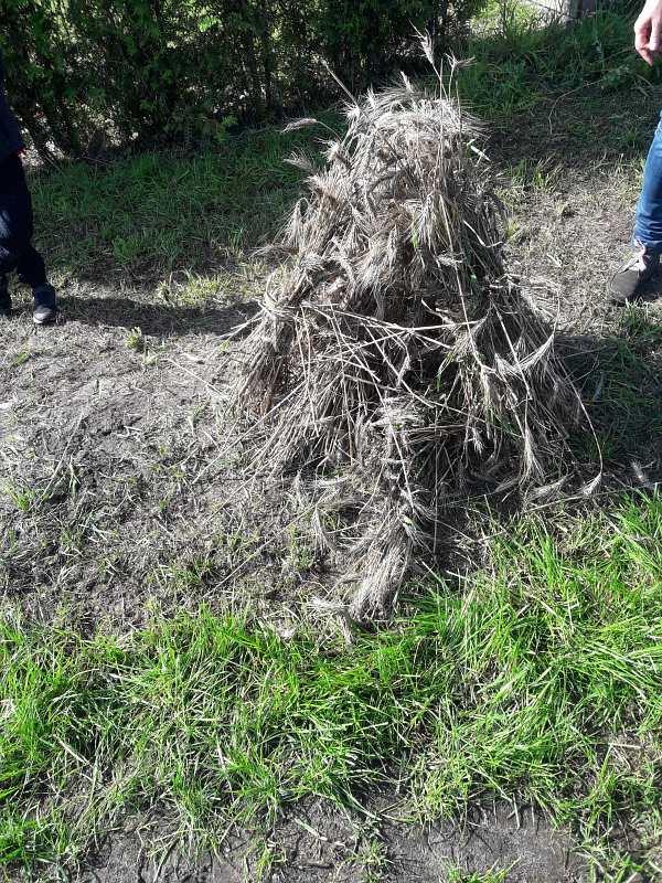 Eine Hocke mit Getreidegarben zum Trocknen der Ernte