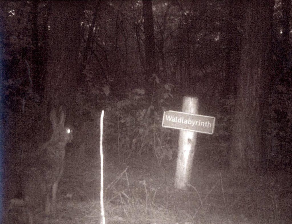 """Hase vor Schild """"Waldlabyrinth"""" in der Nacht"""