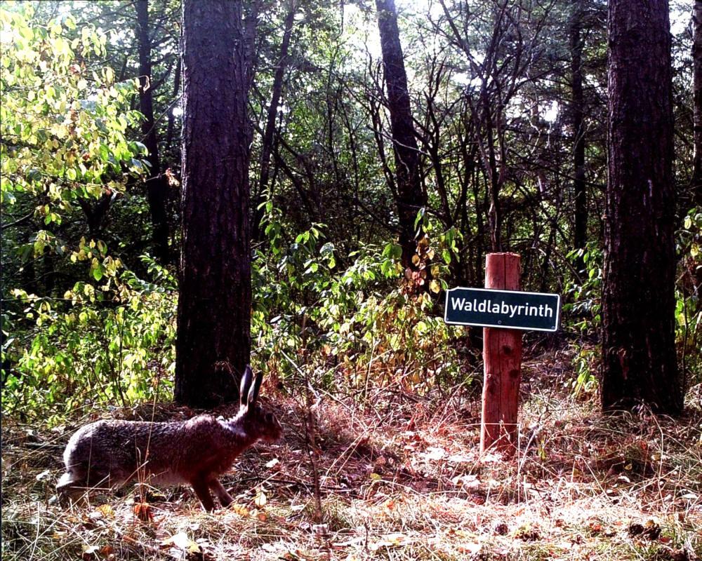 """Hase vor Schild """"Waldlabyrinth"""""""