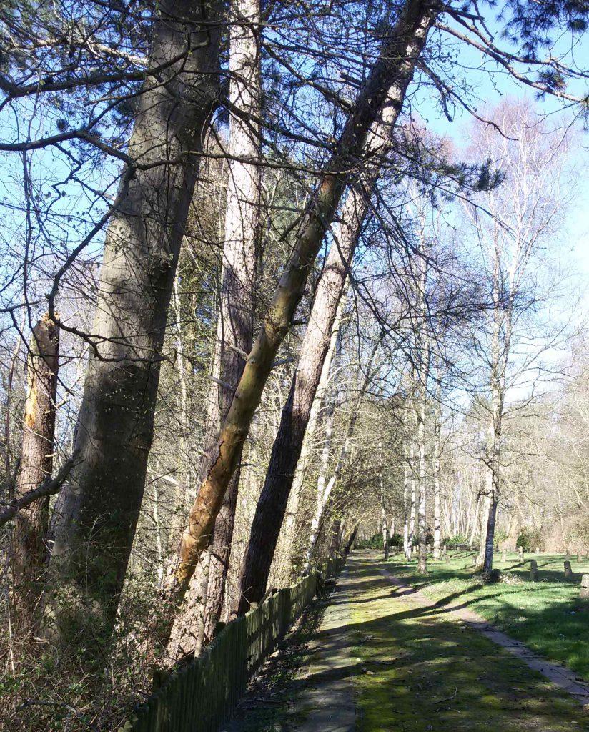 Abgestorbener Baum auf Begräbnisstätte Esterwegen 03/2020