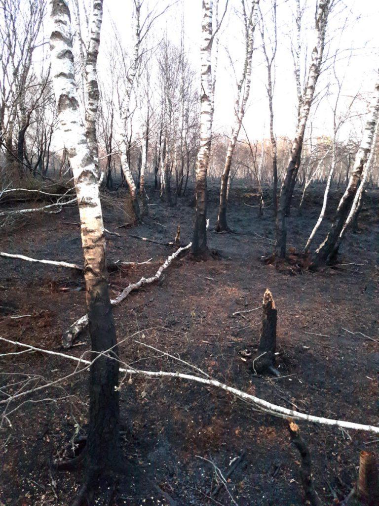 Verbranntes Moor im Aschendorfer Obermoor