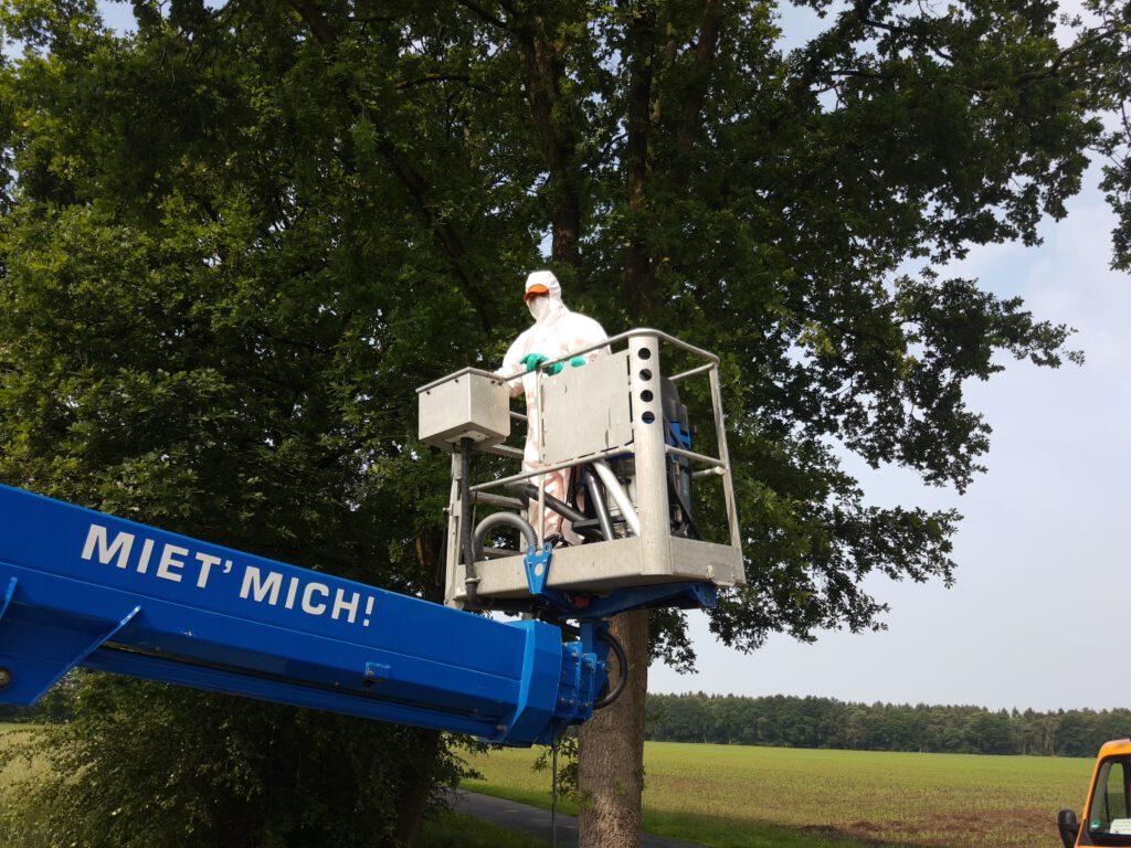 Spezialfirma bei der Bekämpfung des Eichenprozessionsspinners an der Neudörpener Straße am 19.06.2020