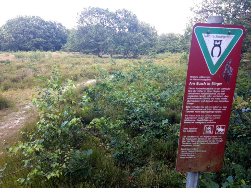 Verbuschung im Naturschutzgebiet Am Busch Börger