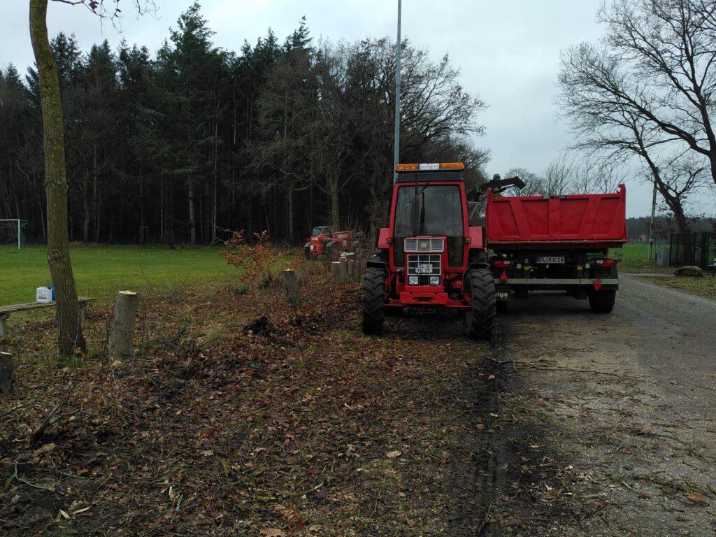 Baumfällarbeiten am Sportplatz