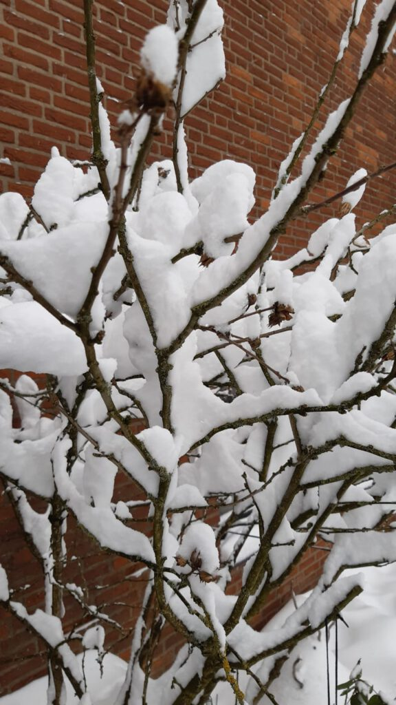 Schnee am 8.2.2021