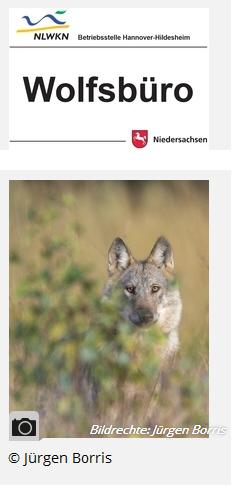 Zur Homepage des Wolfsbüros